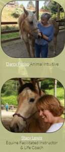 Animal Communication class