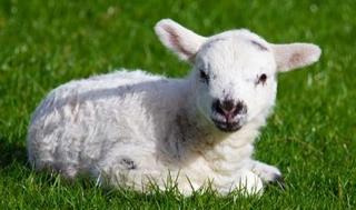 YIN Yoga as soft as a lamb