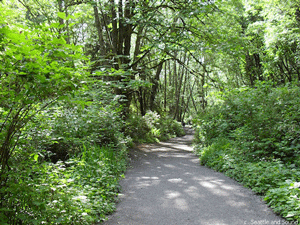 Meadowdale Beach Park Trails